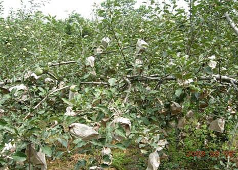 北方落叶果树苹果褐斑病蓝德精粹试验表现
